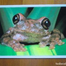 Postales: POSTAL DEL ANIMAL RANA, SAPO (1989) ¡NUEVA!. Lote 68307505