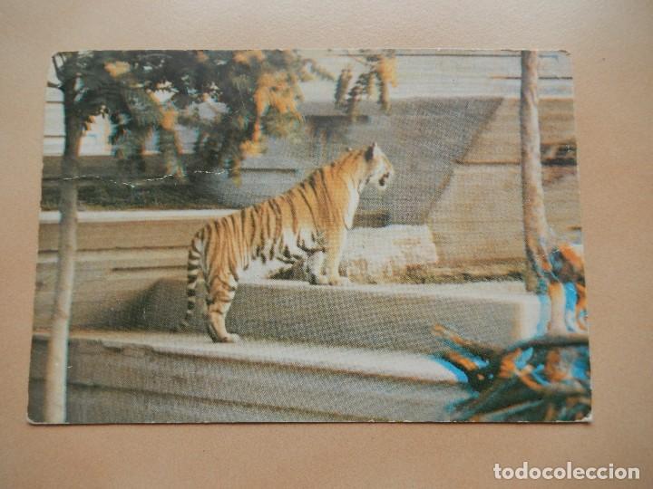 ZOO DE MADRID, TIGRE DE BENGALA. AÑOS 70. POSTAL 3D (Postales - Postales Temáticas - Animales)