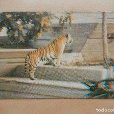 Postales: ZOO DE MADRID, TIGRE DE BENGALA. AÑOS 70. POSTAL 3D. Lote 69737485