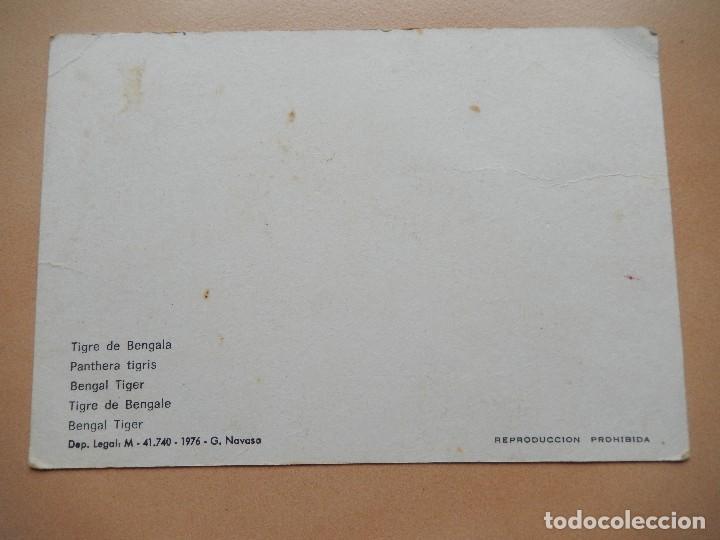 Postales: Zoo de Madrid, tigre de bengala. Años 70. postal 3D - Foto 2 - 69737485