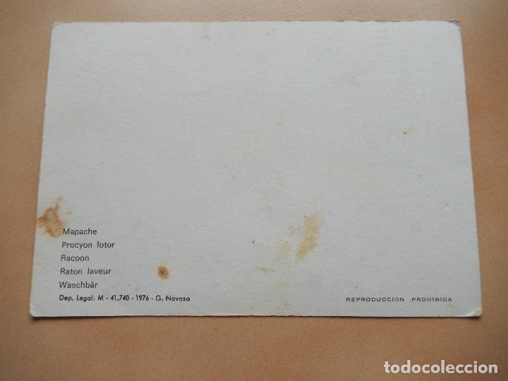 Postales: Zoo de Madrid, mapache. Años 70. postal 3D - Foto 2 - 69737541