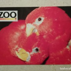 Postales: POSTAL 10*15 - LOROS - FAUNA - ZOO BARCELONA. Lote 70224793