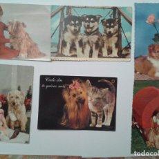 Postales: LOTE DE 6 POSTALES DE PERROS. Lote 73406995