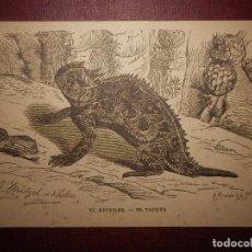 Postales: POSTAL -LA VIDA DE LOS ANIMALES DR. BREHM - VI - REPTILES - EL TAPAYA - SUCESORES DE MANUEL SOLER -. Lote 73824827