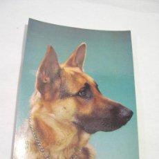 Postales: TARJETA POSTAL ANIMALES, PERRO - CYZ 7892-B - SIN CIRCULAR. Lote 76406223