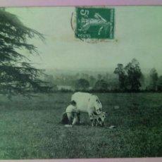 Postales: POSTAL FRANCIA 1910 ORDEÑO VACA. Lote 79913255