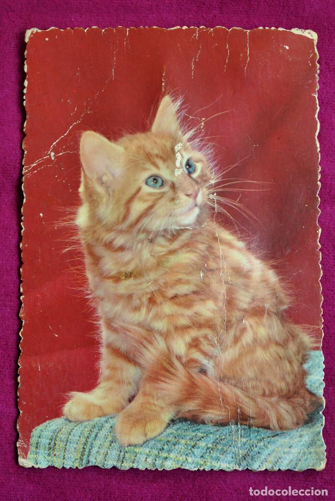 POSTAL SONORA 1910-20 (Postales - Animales)