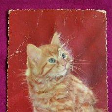 Postales: POSTAL SONORA 1910-20. Lote 81251972