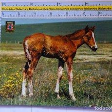 Postales: POSTAL DE ANIMALES. AÑO 1972. POTRO, JEREZ DE LA FRONTERA. 1343. Lote 84278736
