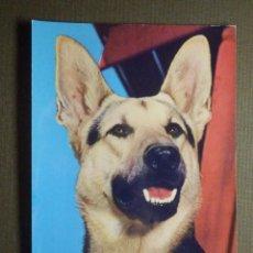 Postales: POSTAL - ANIMALES - PERRO - ROTALCOLLOR - NE - NC. Lote 84608996