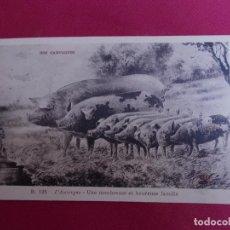 Postales: ANTIGUA POSTAL. NOS CAMPAGNES. B. 125. L'AUVERGNE - UNE NOMBREUSE ET HEUREUSE FAMILLE. Lote 94991951