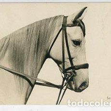 Postales: POSTAL FOTOGRÁFICA, CABALLO. SERIE 127-3162 SIN CIRCULAR REVERSO SIN DIVIDIR. Lote 95155223