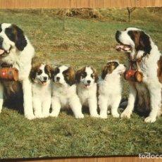 Postales: FAMILIA DE SAN BERNARDOS. Lote 95509767