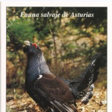 Postales: POSTAL FAUNA SALVAJE DE ASTURIAS UROGALLO. Lote 95816463