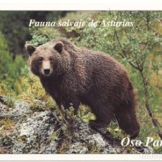 Postales: POSTAL FAUNA SALVAJE DE ASTURIAS OSO PARDO. Lote 95816475