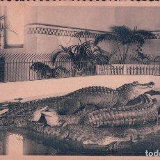 Postales: POSTAL COCODRILOS EN EL ZOOLOGICO DE ANVERS - CROCODILES - ANTWERPEN DIERENTUIN. Lote 96799039