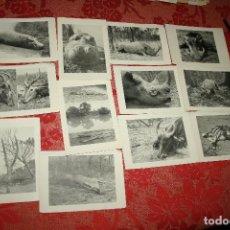 Postales: DOCE POSTALES ORIGINALES DE ANIMALES SOCIEDAD DE CAZA Y TURISMO DE CAMERÚN. Lote 97479131