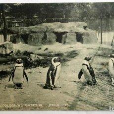 Postales: ANTIGUA POSTAL ZOOLOGICO DE LONDRES - PINGUINOS. Lote 99945403
