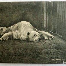 Postales: ANTIGUA POSTAL ESTUDIO DE ANIMALES - BAÑO SECO OSO POLAR. Lote 99946047