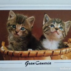 Postales: POSTAL DE GRAN CANARIA CON FOTO DE GATITOS EN UNA CESTA. NO CIRCULADA 1991. Lote 102271467