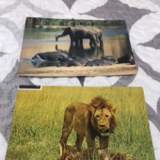 Postales: DOS POSTALES CON ANIMALES, AFRICA. Lote 103516810