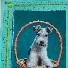 Postales: POSTAL DE ANIMALES. PERRO TERRIER. 1572. Lote 105129411