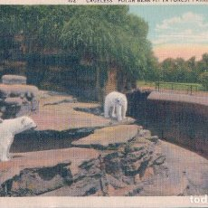 Postales: POSTAL CAGELESS POLAR BEAR PIT IN FOREST PARK - ST LOUISE - MISSOURI - BLACKWELL WIELANDY . Lote 109533535