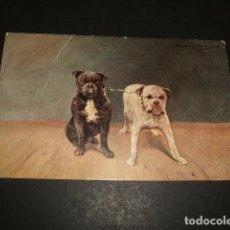 Postales: PERROS POSTAL CROMOLITOGRAFICA 1909. Lote 110202507