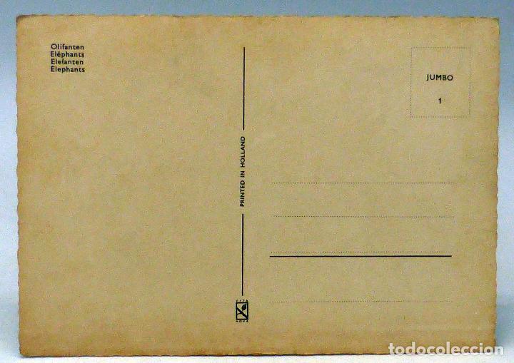 Postales: Postal Elefantes Ed Vita Nova Holland años 70 sin circular - Foto 2 - 111117503