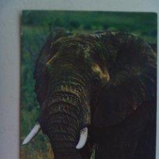 Postales: POSTAL DE UN ELEFANTE AFRICANO . DE KENYA . CIRCULADA A SEVILLA. Lote 111251463