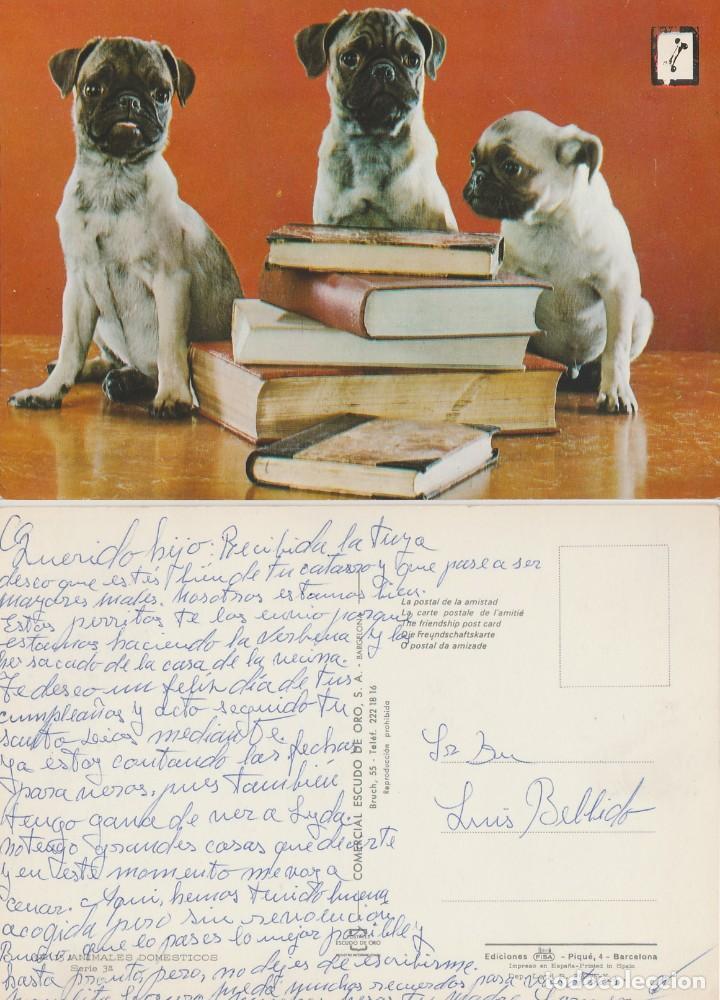 POSTAL DE 3 PERROS CON LIBROS. (Postales - Postales Temáticas - Animales)