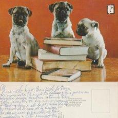 Postales: POSTAL DE 3 PERROS CON LIBROS.. Lote 113049883