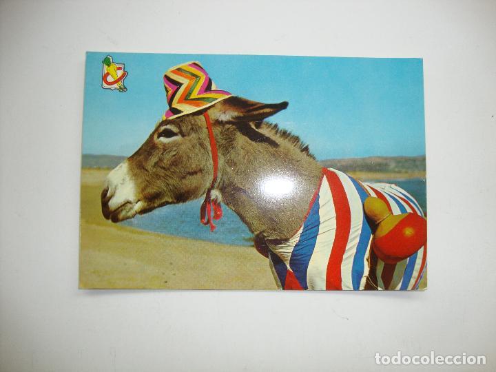 (ALB-TC-18) POSTAL NUEVA TEMA ANIMALES BURRO EN LA PLAYA (Postales - Postales Temáticas - Animales)