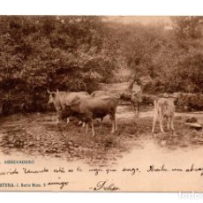 Postales: COLECCION NATURA - EN EL ABREVADERO - VACAS - SIN DIVIDIR - HAUSER Y MENET. Lote 114942699