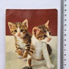 Postales: POSTAL. ANIMALES. GATOS. CERBER EDITORIAL. H. 1970?. Lote 114961880