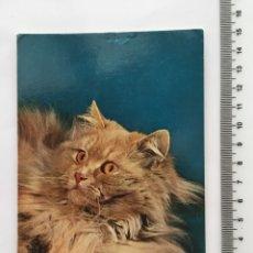 Postales: POSTAL. ANIMALES. GATOS. POSTALES VIKINGO. BARCELONA. H. 1970?. Lote 114962096