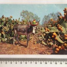 Postales: POSTAL. ANIMALES. CAMPO DE CHUMBERAS. FOT. CAMPAÑA-PUIG-FERRAN. H. 1970?. Lote 114962330