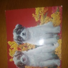 Postales: POSTAL CACHORRO PERROS C Y Z 6478. Lote 114990184