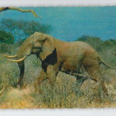 Postales: ELEFANTE AFRICANO -CECAMI-. Lote 115133135