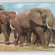 Postales: ELEFANTES AFRICANOS -EDITION EAST AFRICA-. Lote 115133219