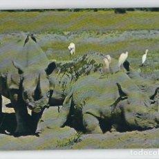 Postales: ANIMALES SALVAJES -ESCUDO DE ORO, 1970-. Lote 115133327