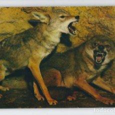 Postales: ANIMALES SALVAJES -ESCUDO DE ORO, 1972-. Lote 115133407