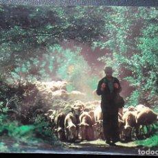 Postales: PASTOR CON REBAÑO DE OVEJAS. IMAGE INTERNACIONAL. NUEVA. VER FOTO.. Lote 116100894