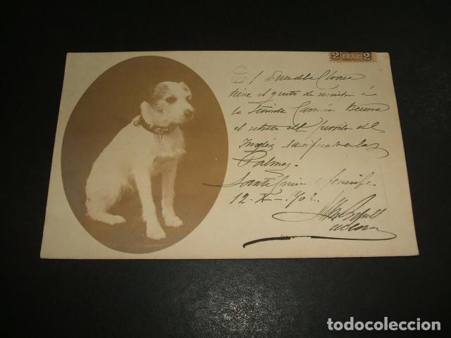 RETRATO DE PERRO SANTA CRUZ DE TENERIFE 1902 POSTAL FOTOGRAFICA (Postales - Postales Temáticas - Animales)