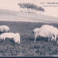 Postales: POSTAL SOUVENIR DE VACANCES - TOUTE LA FAMILIE EN EXCURSION - 3348 - CERDOS EN EL CAMPO. Lote 119606187