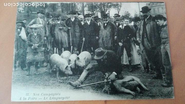 PRECIOSA POSTAL FERIA GANADERA AVEYRON DEPT 12 CERDOS LE LANGUEYEUR PORK PERFECTA CONSERVAC ANIMADA (Postales - Postales Temáticas - Animales)