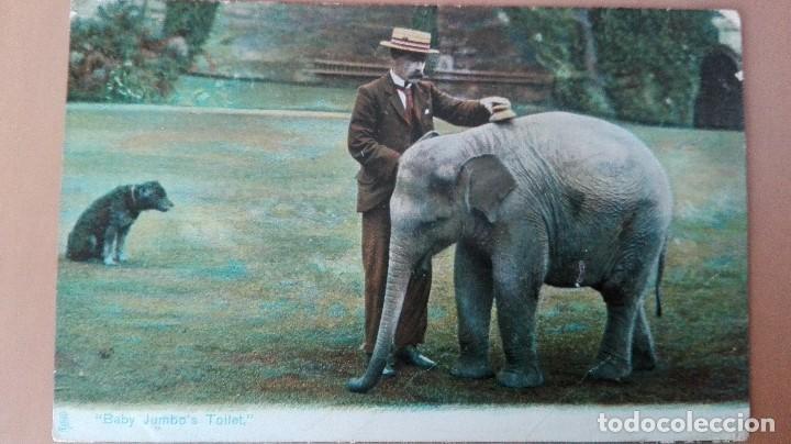 POSTAL ELEFANTES ELEPHANTS BABY JUMBO´S TOILET EDIC INGLESA COLOR CIRCULADA 1905 PERFECTA CONSERVACI (Postales - Postales Temáticas - Animales)