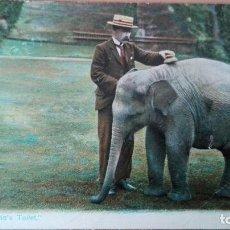 Postales: POSTAL ELEFANTES ELEPHANTS BABY JUMBO´S TOILET EDIC INGLESA COLOR CIRCULADA 1905 PERFECTA CONSERVACI. Lote 120885899
