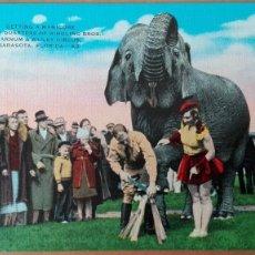 Postales: POSTAL ANIMALES ELEFANTES ELEPHANTS BARNUM & BARNLEY CIRCO EDIC KROPP COLOR PERFECTA CONSERVACION. Lote 120915171