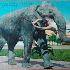 Postales: POSTAL ANIMALES ELEFANTES ELEPHANTS RINGLING BROS CIRCO EDIC HARTMAN CARD COLOR PERFECTA CONSERVACIO. Lote 120915503